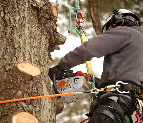 DCP Tree Service LLC employee cutting a tree down