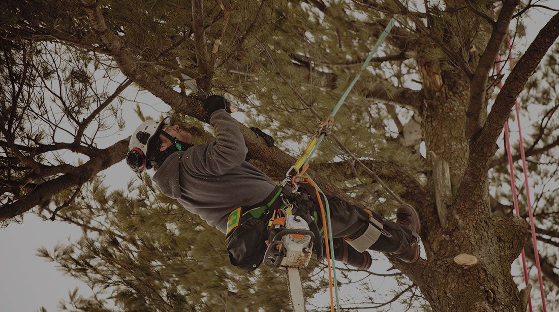 DCP Tree Service LLC: Emergency tree removal in Fairfax Station, Springfield and Fairfax