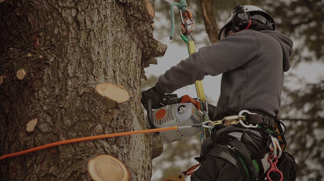 DCP Tree Service LLC: Stump and tree removal in Fairfax Station, Springfield and Fairfax