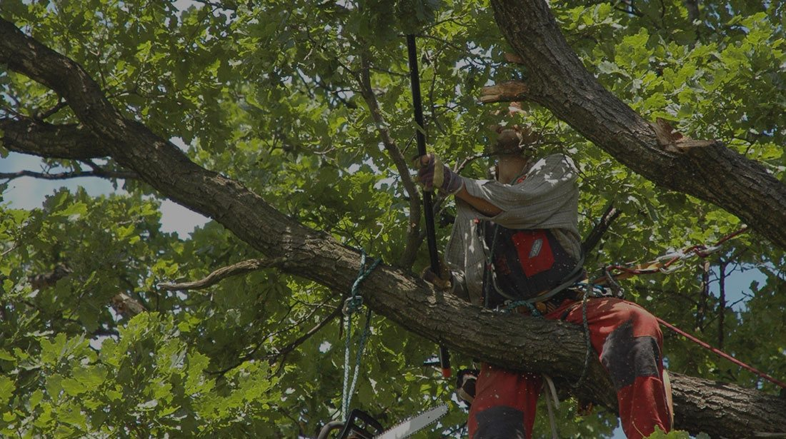 DCP Tree Service LLC: Tree cabling and bracing in Fairfax Station, Springfield and Fairfax