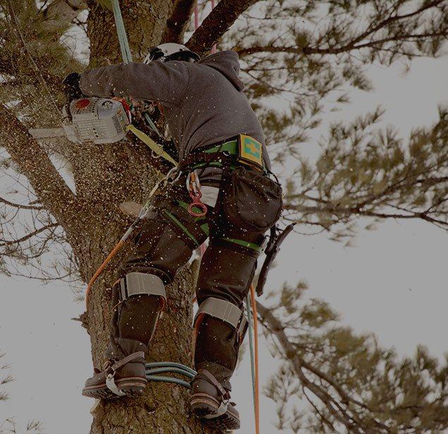 DCP Tree Service LLC: Tree health in Fairfax Station, Springfield and Fairfax
