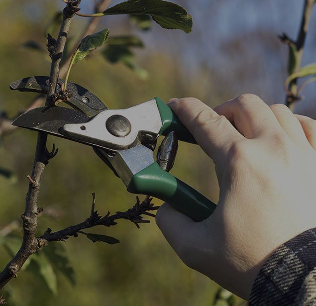 DCP Tree Service LLC: Tree pruning in Fairfax Station, Springfield and Fairfax